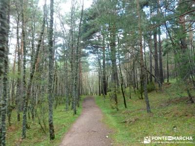 Cascadas Purgatorio,Bosque Finlandia; excursiones semana santa; viajes senderismo